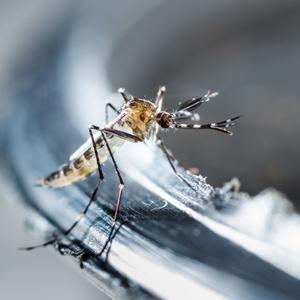 Gelbfieber-Epidemie: WHO will im Kongo fünf Millionen impfen