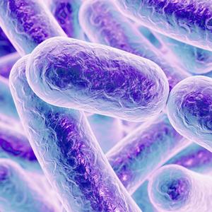 Salmonellen gedeihen nach Antibiotikabehandlung im Darm
