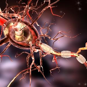 Update Multiple Sklerose: Die therapeutischen Möglichkeiten erweitern sich